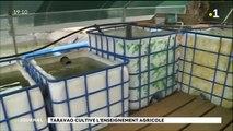 Taravao cultive l'enseignement agricole