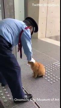 Müzeye Girmeye Çalışan Kediler