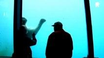 Un ours blanc brise la vitre d'un aquarium au zoo sous les yeux de 2 touristes... Terrifiant