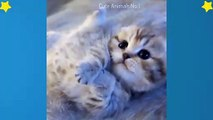 Cute Cats Videos Compilation Cute Moment Of The Cats – Cutest – Funniest Animals! #2