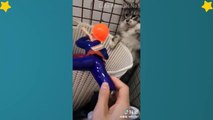 Cute Cats Videos Compilation Cute Moment Of The Cats – Cutest – Funniest Animals! #3