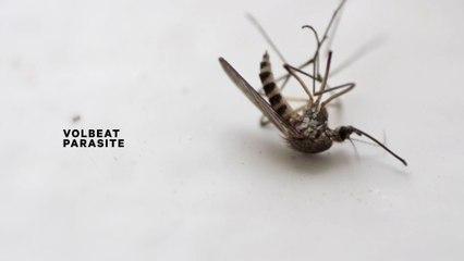 Volbeat - Parasite
