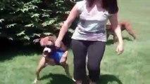 La maî confisque la balle du chien, mais ce que ce dernier fait vous fera mourir de rire !