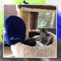 Our domestic foster kittens fully endorse how comfy our New Big Cat Rescue Beanie Hats are! Get o