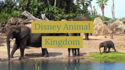 Disney Animal Kingdom!!!
