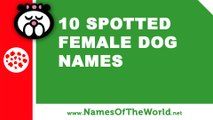10 spotted female dogs names - the best pet names - www.namesoftheworld.net