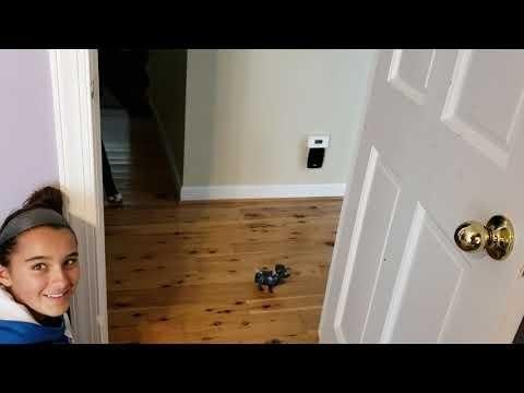 Great Dane Scared of Toy Robotic Dog