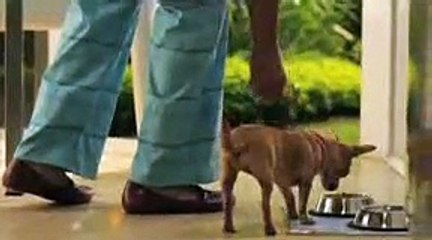 Hábitos comida de cachorros El Hombre que Escucha a los Perros