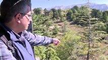 Au Liban, le réchauffement climatique menace les cèdres