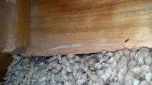 Sugar Ants - Little Black Ants Exterminators