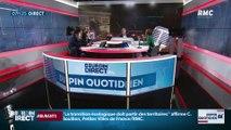 Dupin Quotidien : Bien choisir son sapin de Noël - 30/11