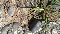 Pest Control for Little Black Ants by Little Black Ant Exterminator