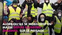 Brigitte Bardot soutien des gilets jaunes : elle flingue Emmanuel Macron