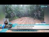 กรมอุทยานฯชี้แจงปมค้านปรับปรุงถนนพะเนินทุ่งในป่าแก่งกระจาน - เที่ยงทันข่าว