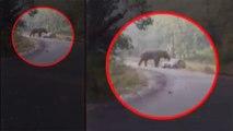 Elephant attacks car in Uttarakhand's Ramnagar, Viral Video | OneIndia News
