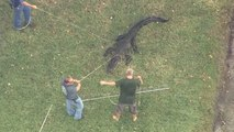 Nach Attacke auf Mann: Alligator in Florida eingefangen