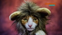 Zoofari | Chat-Majesté | NICKELODEON JUNIOR