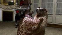 Les marmottes sont de retour dans « Le père noël est une marmotte » !