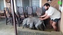 Il trouve un bébé éléphant sur sa terrace et fait tout pour le rendre à sa maman