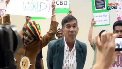 Thailand's Cannabis Crusaders. Admirable or Reckless?
