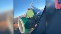 Mesin Frontier Airlines jatuh saat takeoff - TomoNews