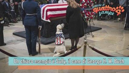 La fedeltà di un cane: Sully veglia sulla bara di Bush