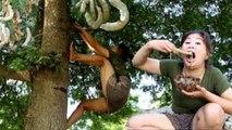 Primitive Technology - Climb Tamarind tree by woman // Des nouvelles méthodes primitives pour vivre