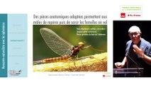 12 - Michel BRULIN - Rencontres Naturalistes 2018