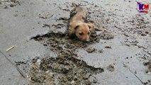 L'histoire émouvante d'un chien sauvé de justesse alors qu'il était coincé dans la boue