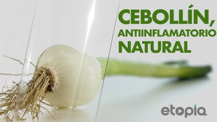Cebollin, antiinflamatorio natural.