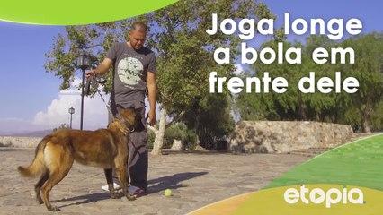Treine o seu pet para brincar com uma bola.