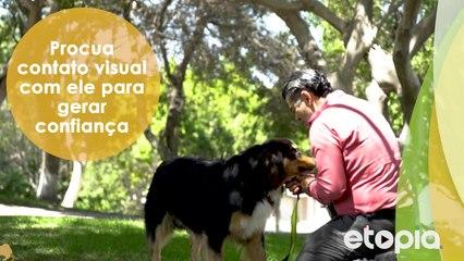 O que fazer para que o seu cachorro atenda o seu chamado?