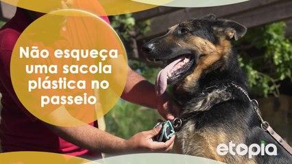 Para um cão amigável, um dono responsável.
