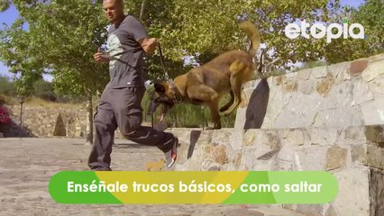 Tips de ejercicios para hacer con tu mascota
