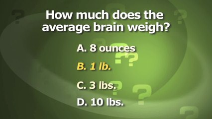 How Much Does the Brain Weigh?