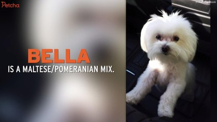 Bella Reunited With Family After She Went Missing Three Years Ago