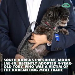 The President of South Korea just rescued a dog from the meat industry signaling a big change for the country.