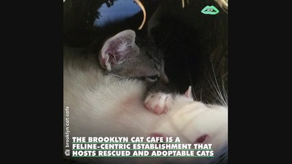 Rats are befriending orphaned kittens at a New York City cat cafe... so maybe there is hope for the world!