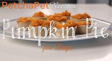 Pumpkin Pie Treats For Dogs