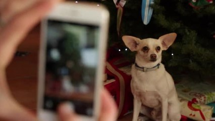 4 Tips For Taking Better Holiday Photos Of Your Pets