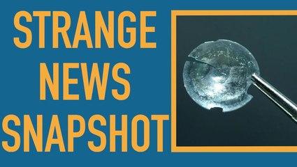 Strange News Snapshot: Week of Aug. 12, 2018