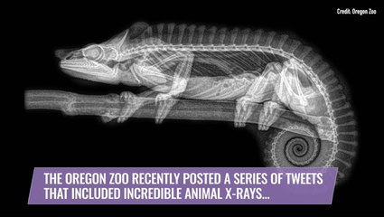 Eerie X-Ray Images Show the Beauty of Animals on the Inside