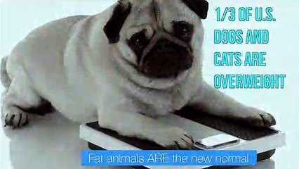Overweight Pets