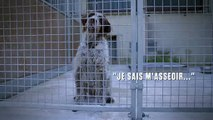 """La vidéo touchante de la Fondation """"30 millions d'amis"""" pour aider les animaux des refuges à l'approche de l'hiver - Regardez"""