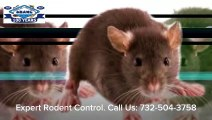 Mice Rats Rodent Control Holiday City Silver Ridge Park NJ 732-504-3758 Ozane.com