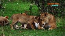 Zoofari | Trophées des Supers Mamans | NICKELODEON JUNIOR
