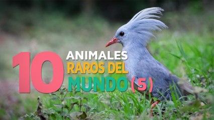 10 Animales raros del mundo | Fascinantes y curiosos 5