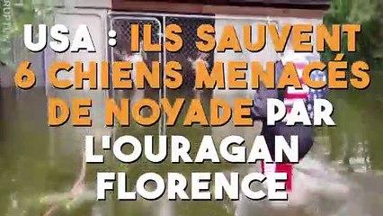 USA  ils sauvent 6 chiens menacés de noyade par l'ouragan Florence !