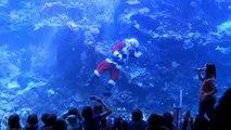 Le père Noël nage au milieu des poissons à San Francisco