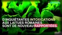Nouvelles intoxication à la laitue romaine.